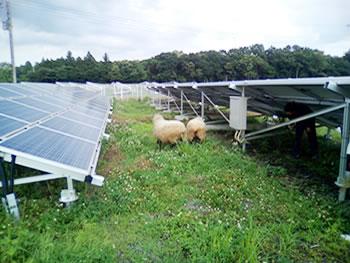 グリーンウィンドのソーラーシェアリング