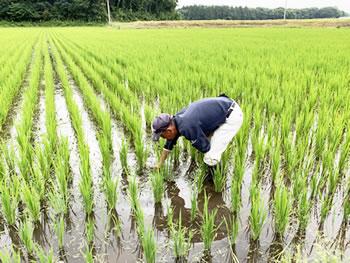 グリーンウィンドの有機農法