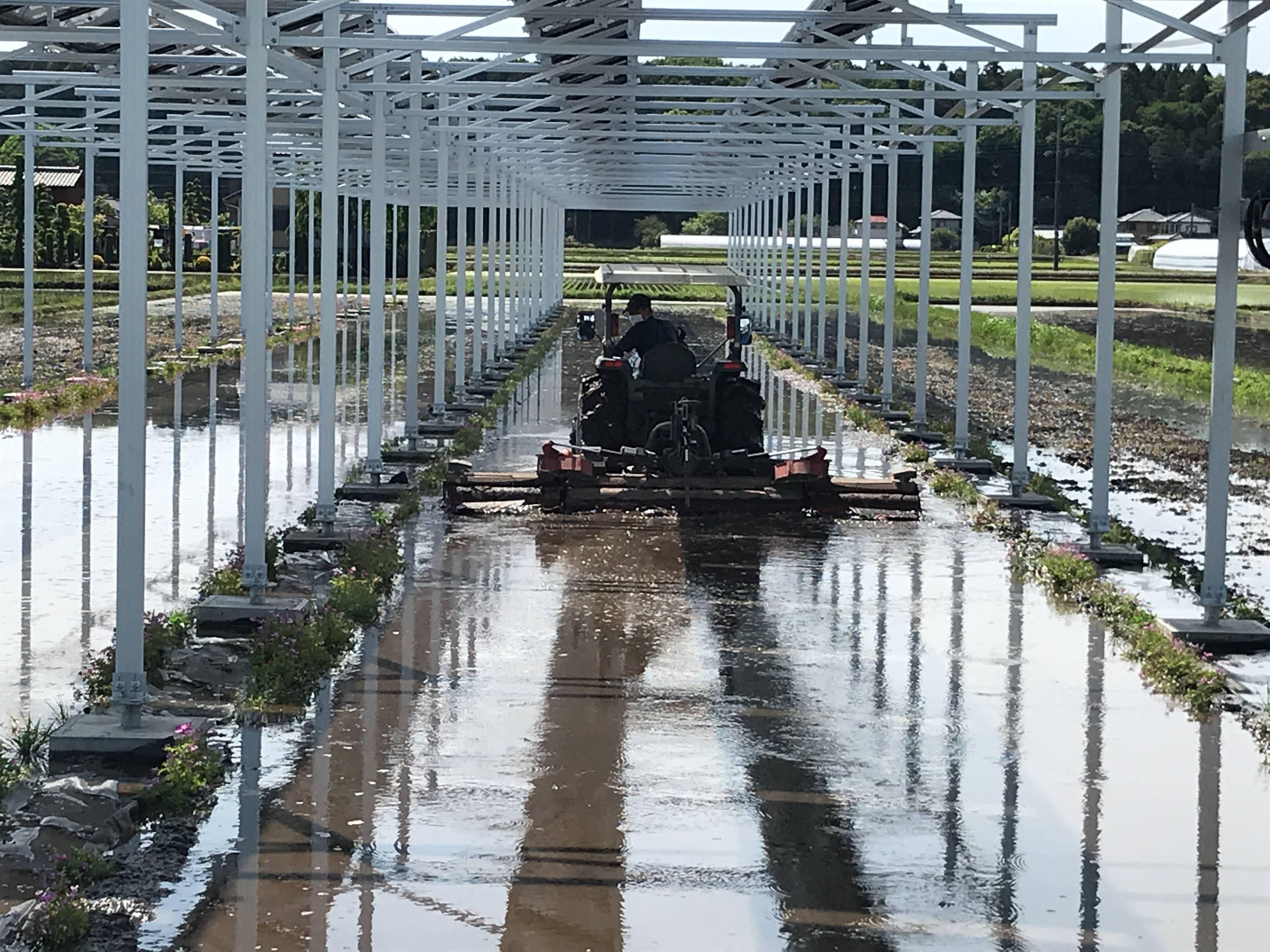 水稲の圃場代掻き